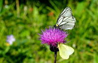 2018信州遠征ファイナル - 紀州里山の蝶たち