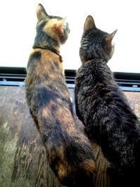 猫のシンクロ - A DAY IN THE LIFE/猫屋敷の日常