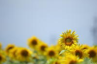 夏の申し子 - ecocoro日和
