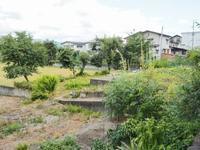 浦佐の体験住宅に「ポポー」の実が大きくなりました - 浦佐地域づくり協議会のブログ