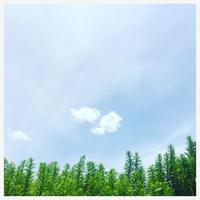 """p912 """" 盆 """" 松の川緑道 2018年7月25日 - 侘び寂び"""