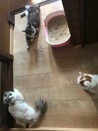 猫たちの日常 - 土筆の庭