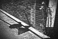 夏草と焼きついた影。 - ~風紋~徒然歳時記