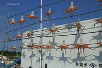 たこ祭り - Berry's Bird