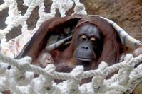 キキさん親子とバレンタインさん - 動物園に嵌り中