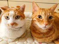 澄まし顔と変顔 - 猫、3兄妹