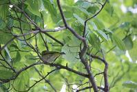 今日の鳥さん 180725 - 万願寺通信