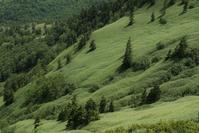 熊笹絨毯 - フォトな日々