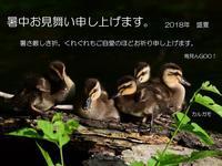 夏休み…カルガモ雛。 - 鳥見んGOO!(とりみんぐー!)野鳥との出逢い