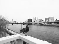 川の畔 - 節操のない写真館