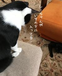 しーちゃんVSハチ あたしが勝つ!! - gin~tetsu~nosuke