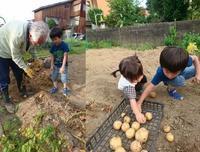 20180722 【家庭菜園】孫とジャガイモ掘り - 杉本敏宏のつれづれなるままに