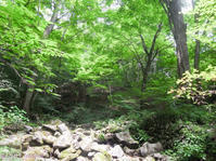 Mt. Mitoh in the interval of scorching heat - Hike in and around Tokyo