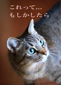 にゃんこ劇場「準備中!」 - ゆきなそう  猫とガーデニングの日記