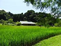 暑さもひと段落/カブトムシバラバラ殺人事件 - 千葉県いすみ環境と文化のさとセンター