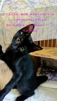 遊ぶの大好き - 八幡地域猫を考える会
