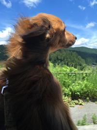 山へ - ウィズアンドウィズ スタッフブログ