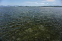 今年初の浜名湖は… - ブラッドノット/岡田裕師のフライフィッシング ブログ