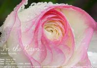 台風にて28日のレッスンはお休み。土日恋フォト補講8月11(土)、土日恋フォト8月25日(土)、平日恋フォト9月13日(木) - 東京女子フォトレッスンサロン『ラ・フォト自由が丘』-写真とフォントとデザインと現像と-