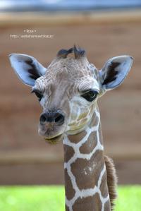 第二子誕生 - 動物園でお散歩