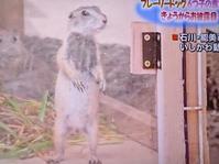 思わずテレビパチリ - NATURALLY