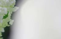 今日のふわラー #370 - ainosatoブログ02