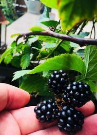 収穫 - Bibury Court Blog