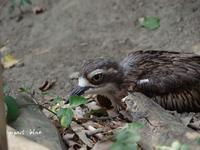 キャンベルタウン野鳥の森に行ってみた(^^)/ - インパクトブルー