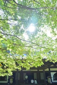 降り注ぐ@ 知足院 地蔵会 - 東大寺が大好き