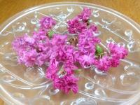 ☆妖精さんのフリル・サルスベリの花☆ - ガジャのねーさんの  空をみあげて☆ Hazle cucu ☆