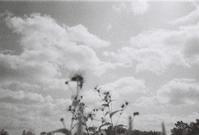 夏の空 - Amana Films