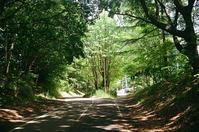 樹木のトンネルと札幌この夏の最高気温31.9度 - 照片画廊