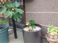 熱 - 寿命 - お茶畑の間から ~ Ke-yaki Pottery
