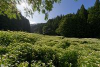 暑すぎた半夏生 - katsuのヘタッピ風景