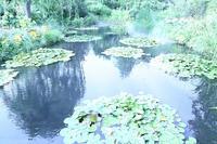 印象派の巨匠モネが愛した庭園と、睡蓮の池 - 旅プラスの日記