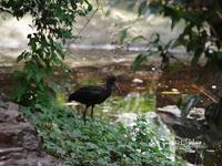キャンベルタウン野鳥の森に行ってみた(^^)/~続~ - インパクトブルー