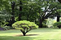 殿ヶ谷戸庭園でレンゲショウマ - 子猫の迷い道Ⅱ