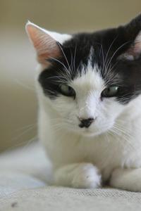 シロ子とお話し - Black Cat Moan