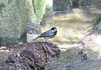 ヤマガラ - zorbaの野鳥写真と日記