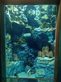葛西臨海水族園:チリ沿岸、オーストラリア南部~フジツボから覗くもの、必殺!ハリセンボン!! - 続々・動物園ありマス。
