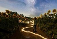 夜のヒマワリ畑 - Jackpooh's Blog