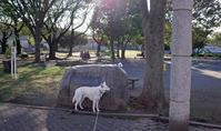 Vol.1368 中留公園 - 小太郎の白っぽい世界