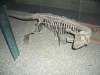 ハルピン 黒竜江省博物館(その2) - 中国探検想い出日記