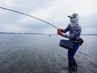 (プロショップ・チームサバロ!!浜名湖クロダイの激熱テーリング祭りを堪能) - Fly Fishing Total Support.TEAL