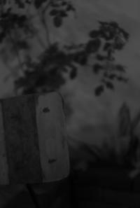 Night garden - floating mind