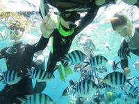 夏休みですね!! - 沖縄ダイビング&フィッシング DSA ブログ