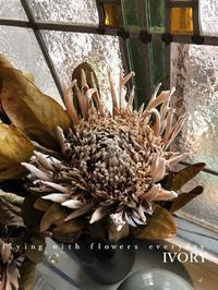 【明日の営業について】 -  Flower and cafe 花空間 ivory (アイボリー)