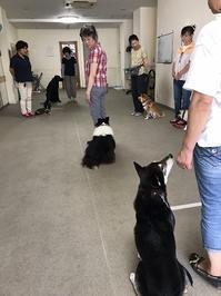 7月のグループレッスン~水曜日組~ - kleiner heine