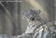 2018年7月 王子動物園1 - ハープの徒然草