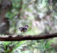 残り物を探しに・・・ - 一期一会の野鳥たち